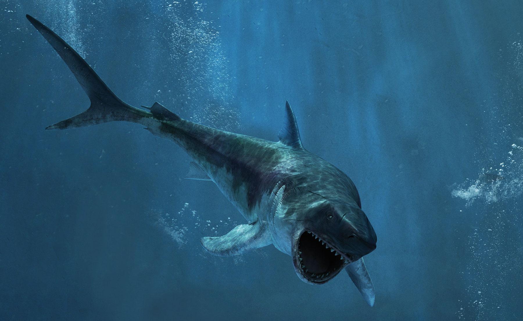 Spectacle de requin